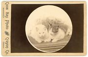 Two Kitty Cats Cabinet Photo