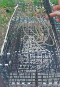 Local Pickup No Shipping Maine Grown Lobster Crabbing Trap Heavy Duty Saltwater