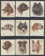Cigarette Cards X9 Wills Dogs A Series Album Clause 1927 Ided206