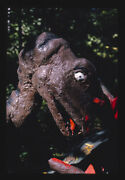 Unframed Photo Prehistoric Forest Onsted Michigan 1988 Margolies John 30a