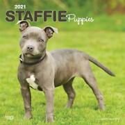 Staffordshire Bull Terrier Puppies 2021 Square Btuk Calendar By Browntrout Paper