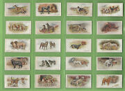 Gg2. Set50 1925 Dogs Scenic Background Cigarette Cards - John Player And Sons