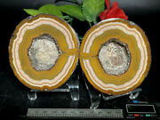 Color Agate Achat Nodule Chinese Fighting Blood Agate Xuanhua 706g Pair Top 3