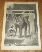 1875 Antique Print Of A Veterinarian And Elephant Veterinary Doctor At Zoo