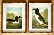 Audubon Bookplates - Diptych Of Penguins Professionally Framed In Faux Bamboo