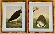 Audubon Bookplates - Diptych Of Puffins Professionally Framed In Faux Bamboo