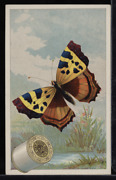 Victorian Trade Card 1880s J And P Coats Six Cord Thread Cotton Sewing Vtc-c119