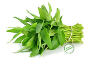 Rau Muong, Ong Choy, Brown Water Spinach Seed Usa