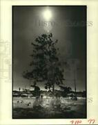 1983 Press Photo Operation Plant Rescue Tree Planted At San Jacinto College, Tx
