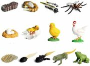 Life Cycle Figures Of Frog Mosquito Chicken Plastic Realistic Animal Figurines