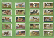 Ff. Set Of 1936-38 Dogs Gallaher Cigarette Cards - Series 1 And 2