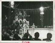 1984 Press Photo Rosinback Riders Perform At James Zoppe And The Big Apple Circus