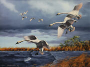 David Maass Trumpets Of Autumn - Trumpeter Swans Artistand039s Proof Giclee On Canvas