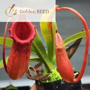 5 Seeds Nepenthes Tropical Pitcher Carnivorous Plants Monkey Cups Home Gardening
