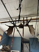 48andrdquo Main Moose Full Antlers And Skull Naturally Attached Still.10 Points