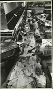 1981 Press Photo Workers At Conveyor Belt Separate Parcel And Metered Flat Mail