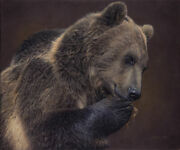 Daniel Smith Nose For Honey - Grizzly Bear Giclee On Canvas