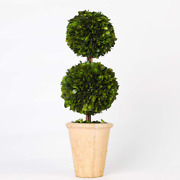 Preserved Boxwood Two Sphere Topiaryandnbsphome Plant Potted In A Mossy Stone Planter