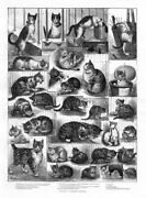 Louis Wain Cat Tangled In Yarn Our Cats Domestic History Basket Cat Show Winner