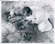 1956 Artist Paints Decoy Gull Eggs Copying Real Ones Press Photo
