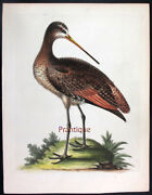 1744edwards George Painted By Hand Copper Eng. Exotic Birds Unb