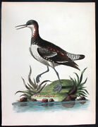 1744edwards George Painted By Hand Copper Eng. Exotic Birds Ung
