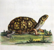 1744,edwards George Painted By Hand Copper Eng. Land Tortoise From Carolina Up8