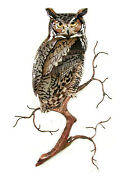 Wall Art - Great Horned Owl Metal Wall Sculpture - Free Shipping