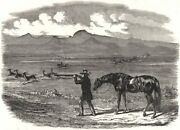 Springbok Hunting In South Africa, Antique Print, 1856