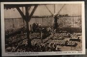 Mint Palestine Rppc Real Picture Postcard Nahalal Agric Training School For Girl