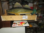 Large Wood Carved Walleye 7 Fish Decoys By Artist And Wood Carver Jim Wetzel