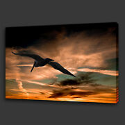 Bird Flying In The Sunset Cloudy Sky Box Canvas Print Wall Art Picture Photo