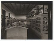 Large 1909 Photo Of Numerous Ore Samples On Display At Goldfield Nevada