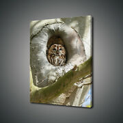 Brown Owl Bird Sitting In The Tree Hole Canvas Print Wall Art Picture Photo