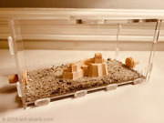 Ant Shack Large Ant Outworld Kit Chinese Wall - Ant Farm Formicarium