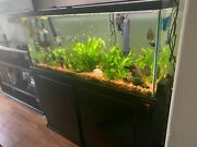 55 Gallon Glass Aquarium With Cabinet Stand