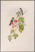 Gould - Tschudiand039s Wood-nymph. 136 1849 Original Hand-colored Folio Lithograph