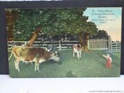 Little Boy Cattle Corral Postcard Cow Come Bossy Young Wisconsin Farmer 1914 Wi