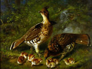 Framed Canvas Art Print Painting Wild Grouse Bird In Forest Chicks