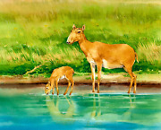 Wooden Jigsaw Puzzles100pieces New Russian Saiga Antelope Toys Gift
