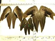 Gadwal Green Wing Teal American Widgeon Prime Hen 3xwing Pair Fly Tying Feathers