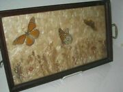 Vintage Real Butterflies Mounted And Framed In Tray Monarchs Floral Fauna 1940and039s