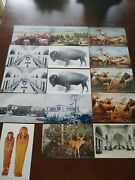 Lot 15 Chicago Il Field Museum Of Natural History Vintage Exhibits Postcard L150