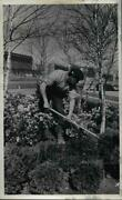1965 Press Photo A Man Works In The Mall Gardens