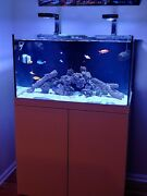 Awesome 90 Gallon Reef Tank For Sale With Everything