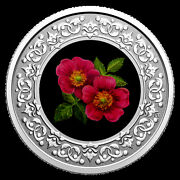 Canada Floral Emblem 3 Silver Coloured Coin Alberta Wild Rose Coin Only