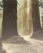 Rare Robert Bradley Hand Tinted Photo Of Mt Rainier Old Paradise Road. 1920and039s.