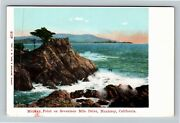 Monterey Ca-california, 17 Mile Drive Midway Point Cypress Tree Vintage Postcard