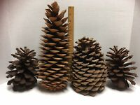 """🎄 Lot of 4 LARGE amp; JUMBO Real Pine Cones 12"""" 8"""" 6"""" Christmas Nature Natural $14.99"""
