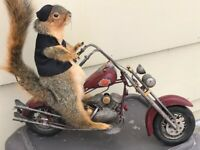 SQUIRREL MOUNT RIDING A HARLEY DAVIDSON MOTORCYCLE UNIQUE TAXIDERMY
